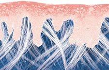 Tranh minh họa sinh động về bề mặt da