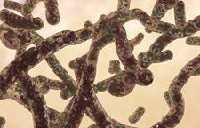 Vi khuẩn mụn trứng cá