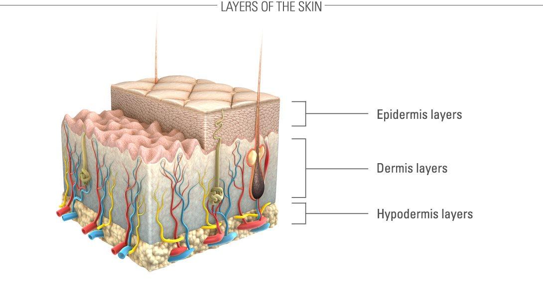 Giới thiệu sinh động về làn da và các lớp của chúng