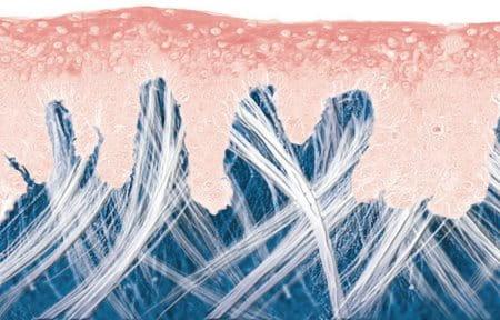 Giới thiệu sinh động về làn da trẻ và mối liên kết giữa các lớp của da