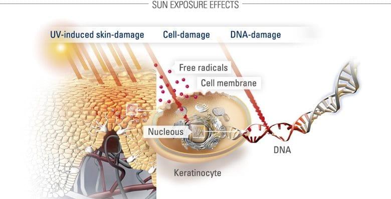 bảo vệ da khỏi ánh nắng  mặt trời và sự phục hồi DNA
