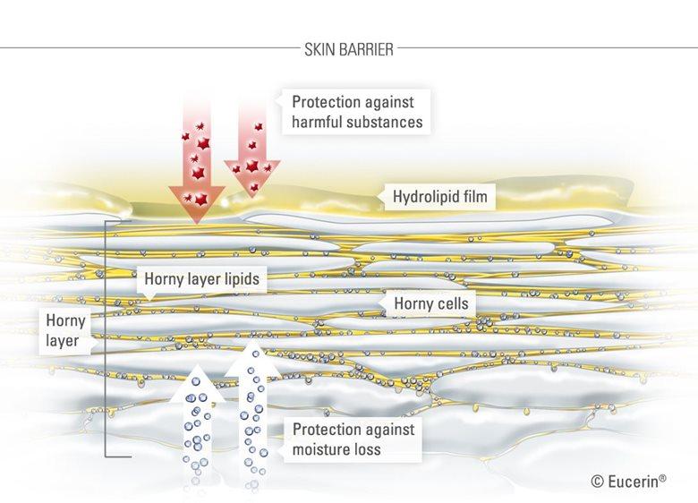 Minh họa sinh động về làn da và lớp sừng của nó